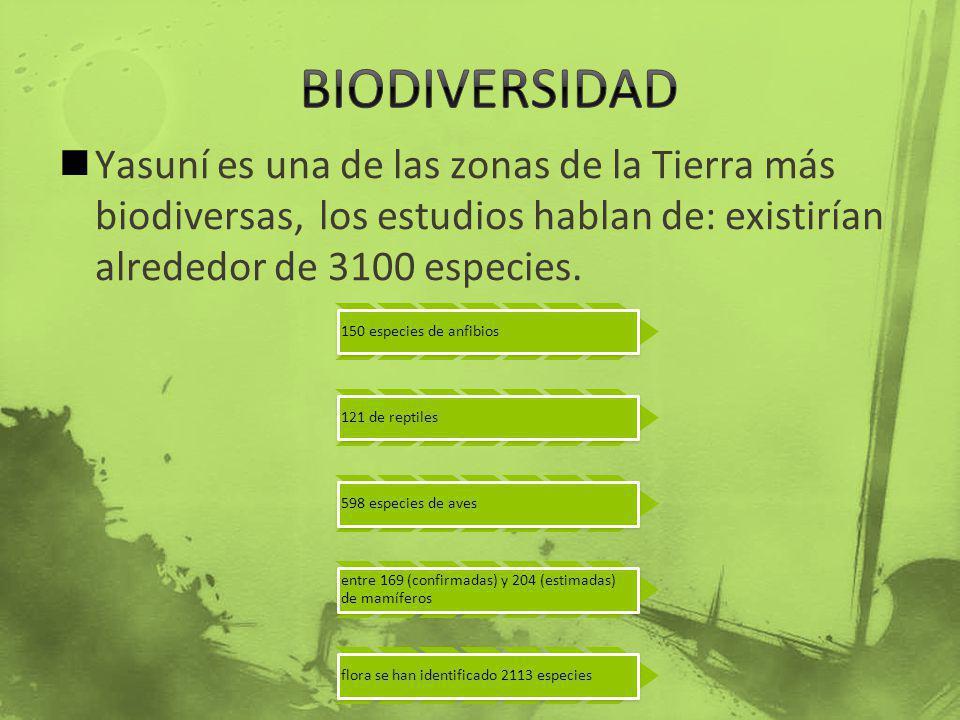BIODIVERSIDAD Yasuní es una de las zonas de la Tierra más biodiversas, los estudios hablan de: existirían alrededor de 3100 especies.