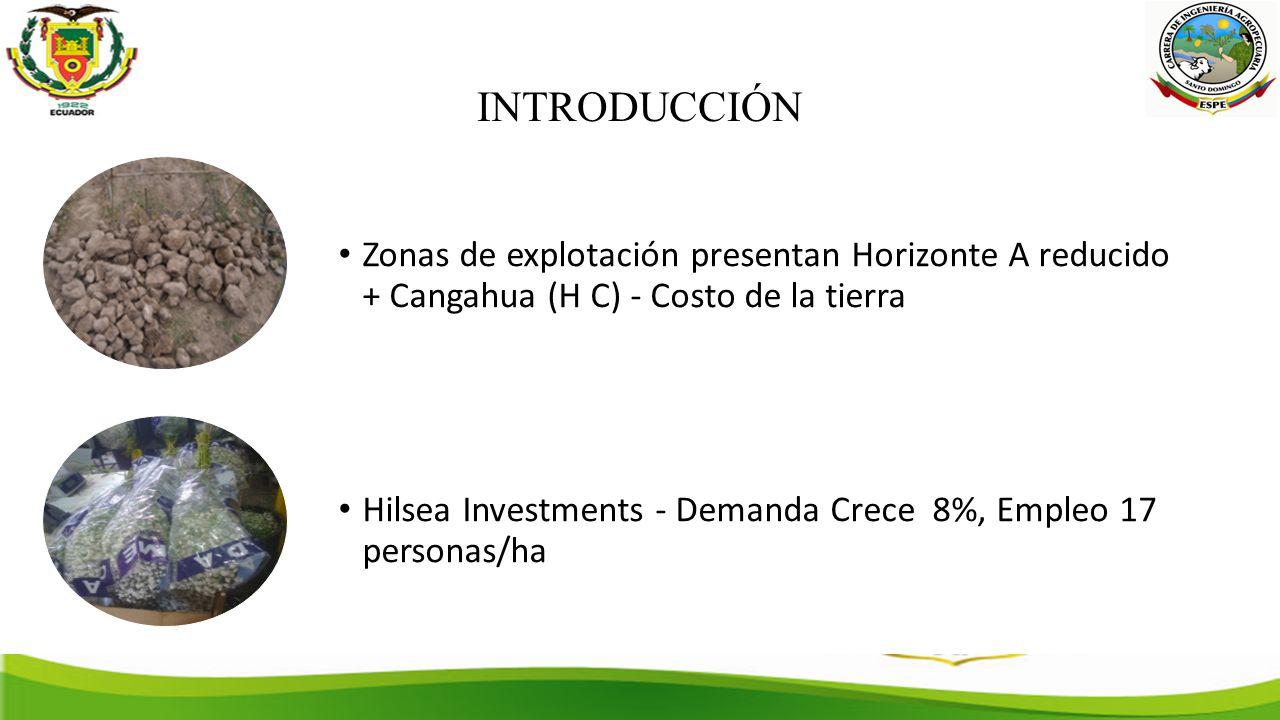 INTRODUCCIÓN Zonas de explotación presentan Horizonte A reducido + Cangahua (H C) - Costo de la tierra.