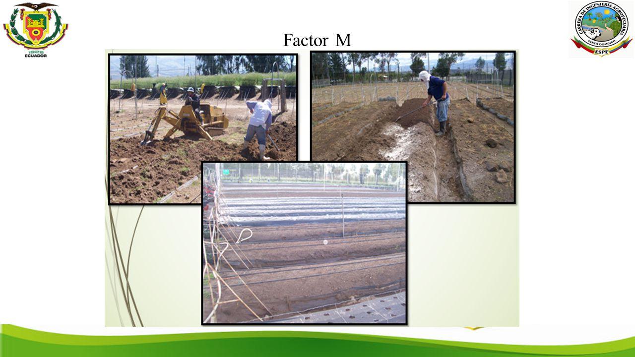 Factor M