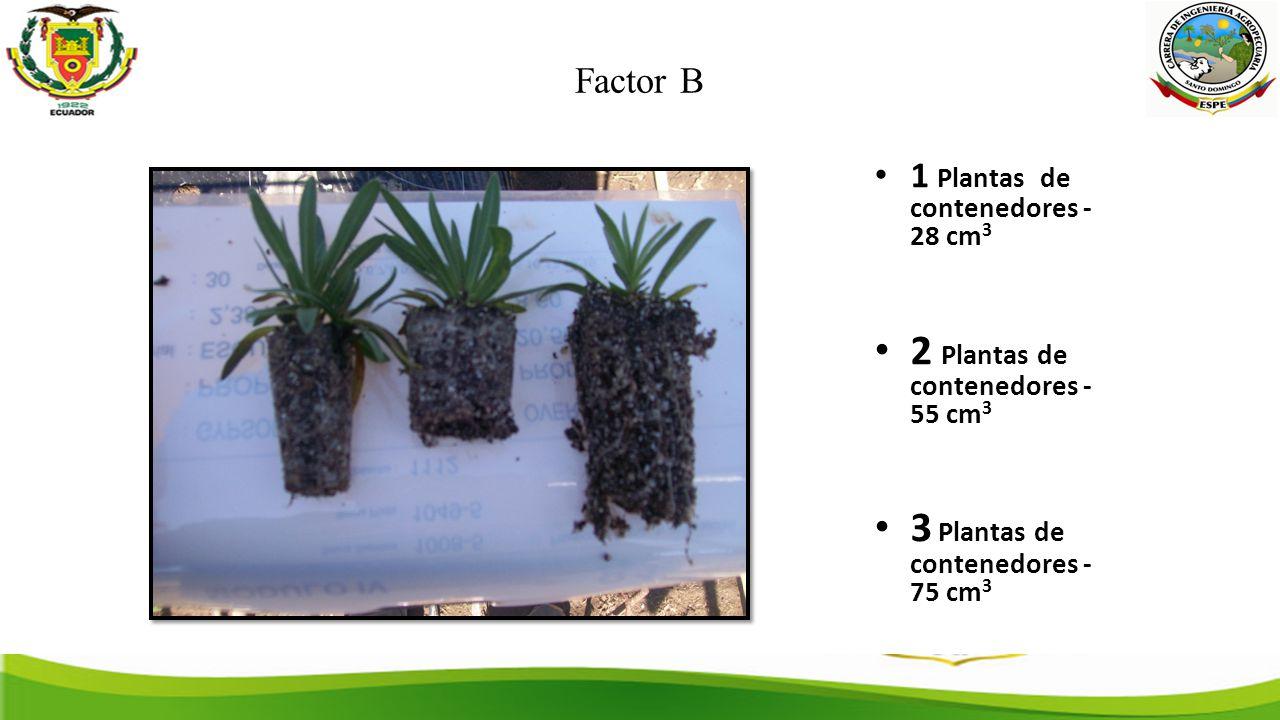 2 Plantas de contenedores - 55 cm3