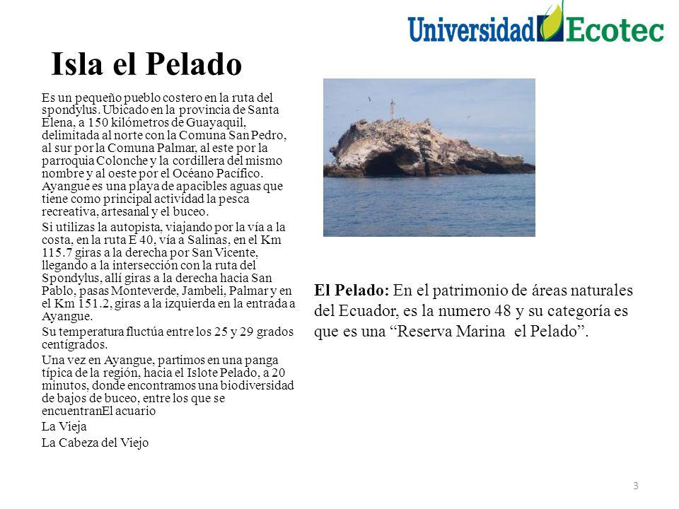 Isla el Pelado