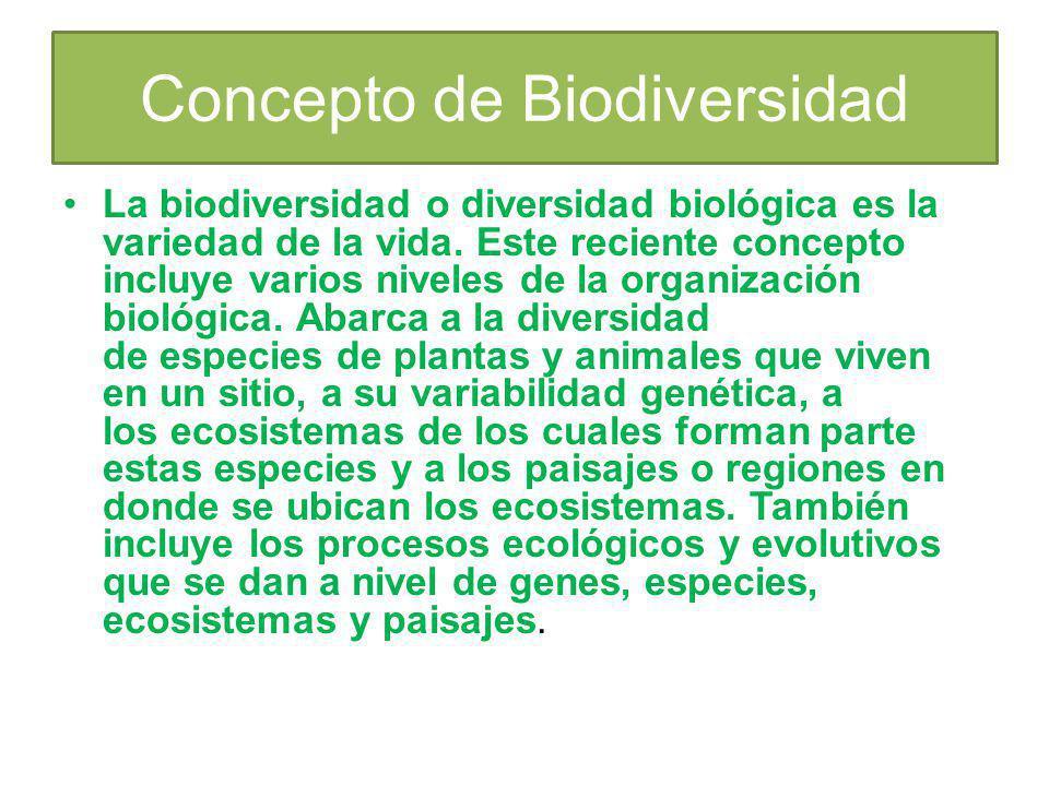 Concepto de Biodiversidad