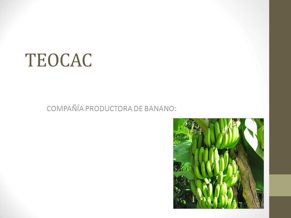 COMPAÑÍA PRODUCTORA DE BANANO:
