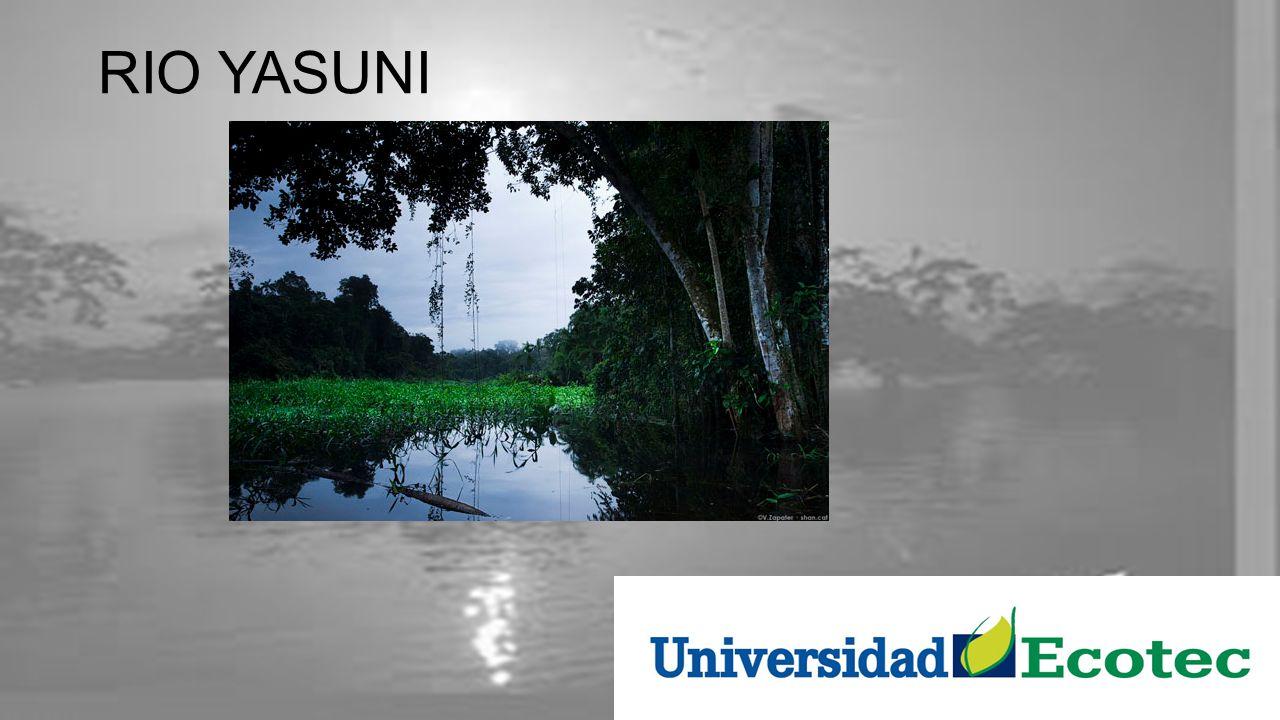 RIO YASUNI