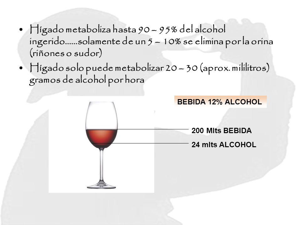 Hígado metaboliza hasta 90 – 95% del alcohol ingerido……solamente de un 5 – 10% se elimina por la orina (riñones o sudor)