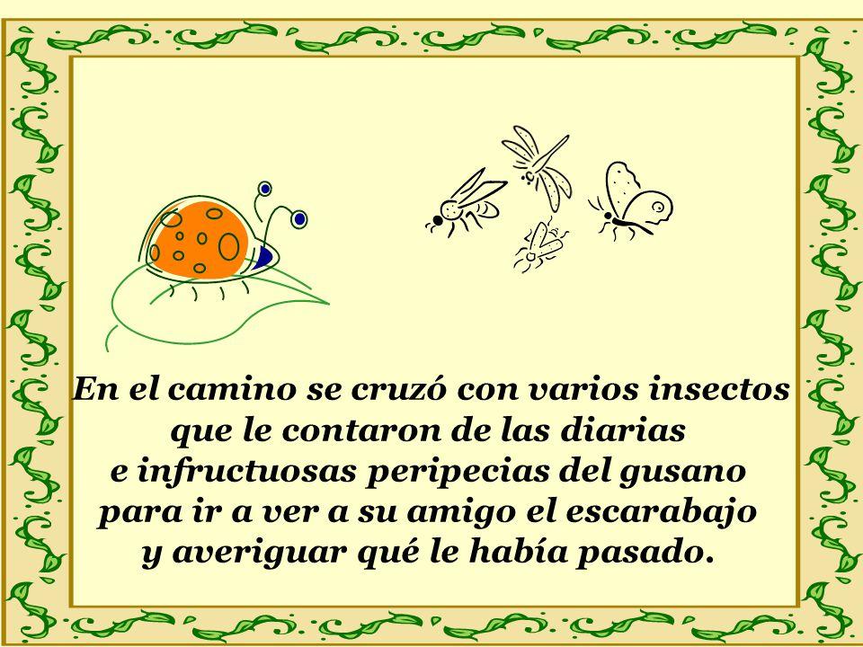 En el camino se cruzó con varios insectos que le contaron de las diarias e infructuosas peripecias del gusano para ir a ver a su amigo el escarabajo y averiguar qué le había pasado.