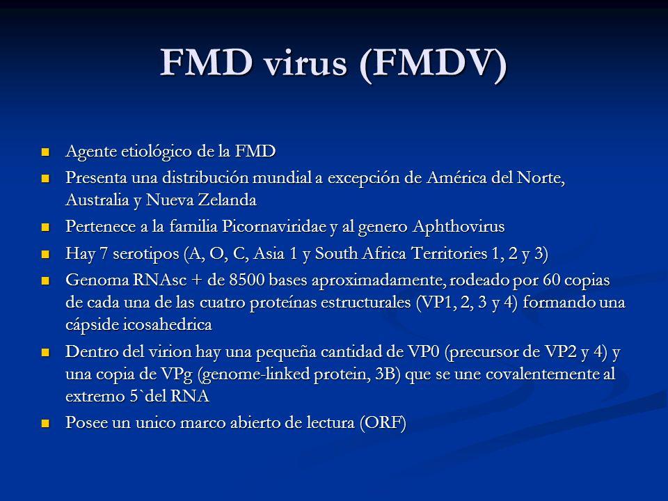 FMD virus (FMDV) Agente etiológico de la FMD