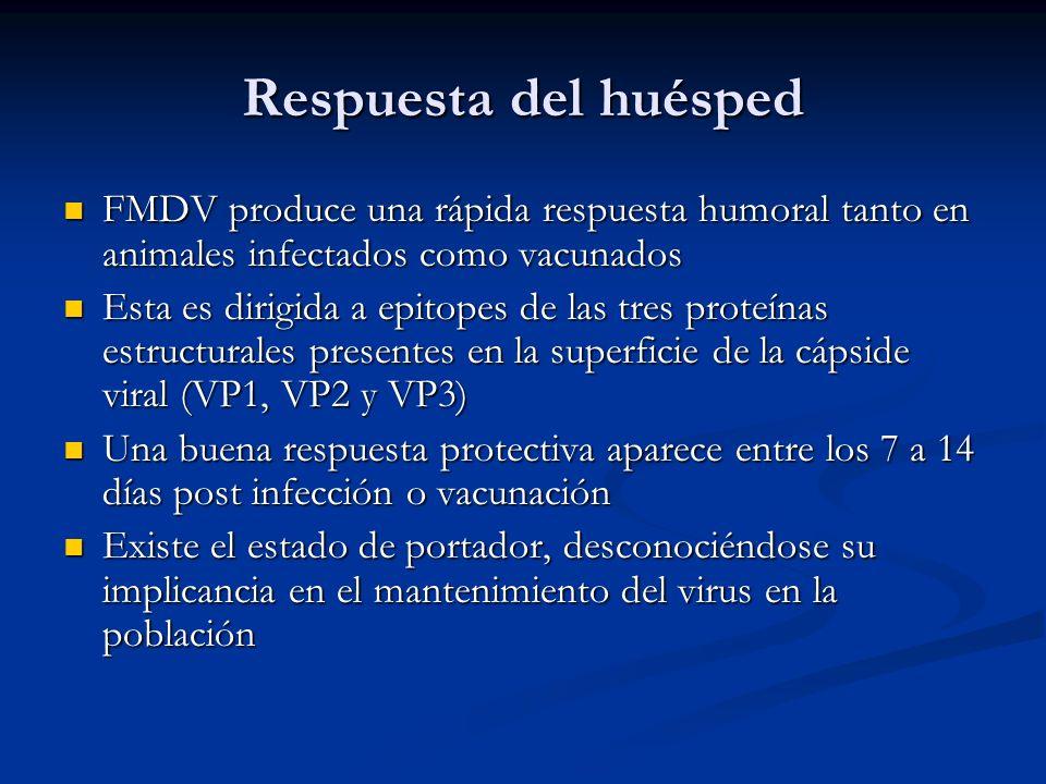 Respuesta del huésped FMDV produce una rápida respuesta humoral tanto en animales infectados como vacunados.