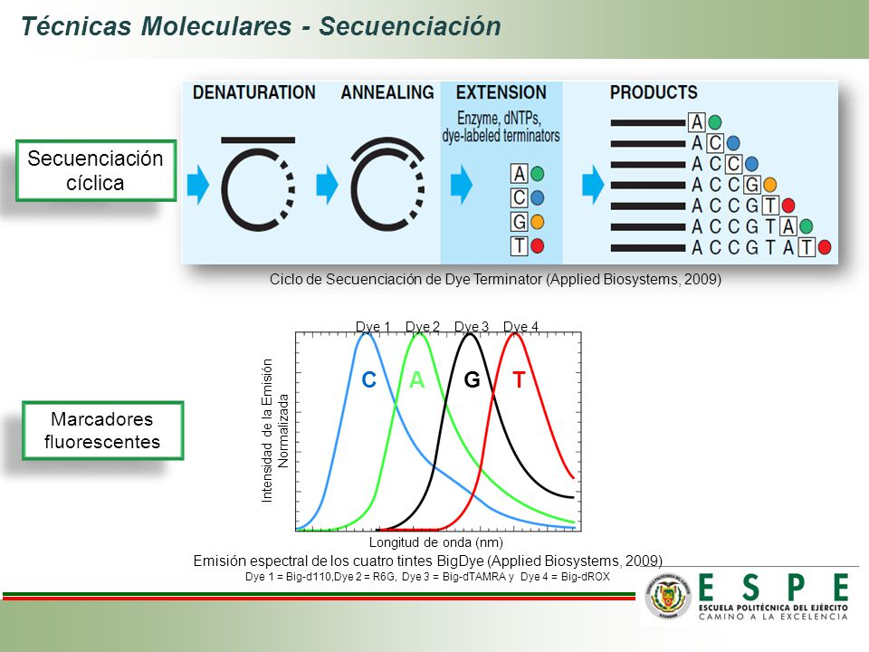 Técnicas Moleculares - Secuenciación