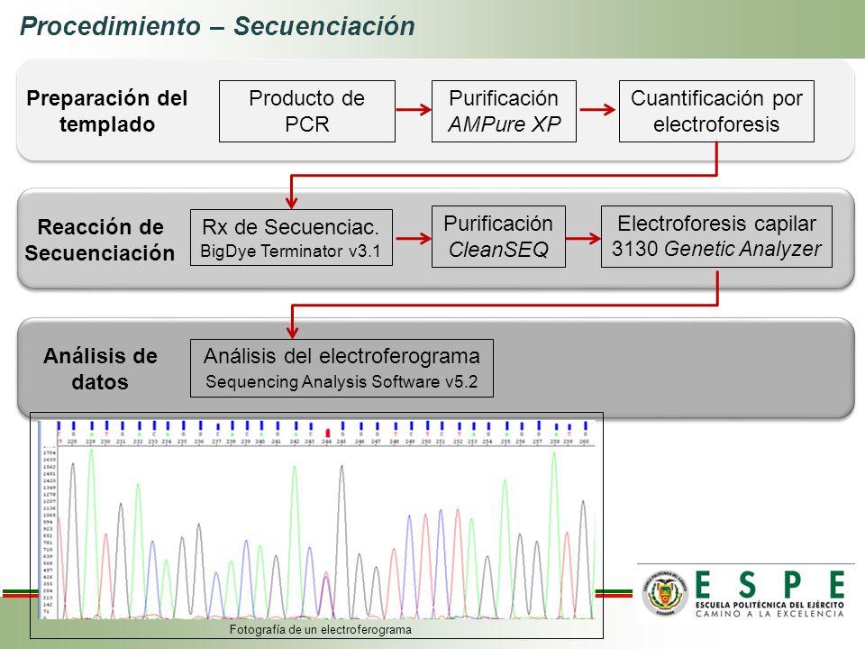 Preparación del templado Reacción de Secuenciación
