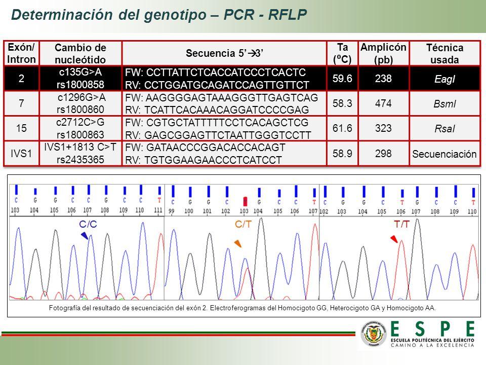 Determinación del genotipo – PCR - RFLP