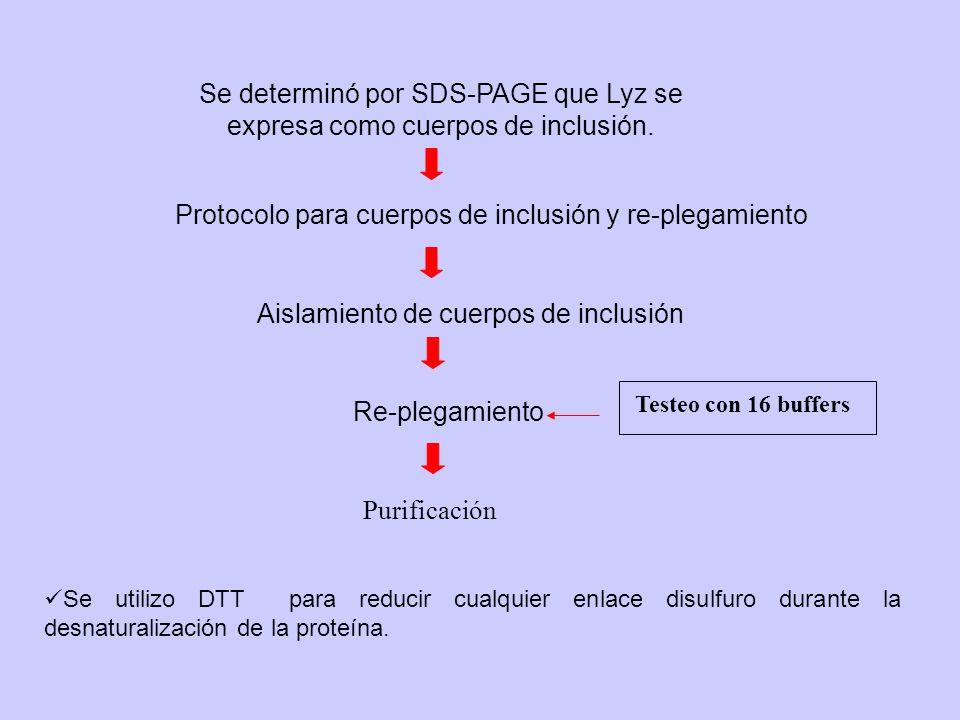 Protocolo para cuerpos de inclusión y re-plegamiento