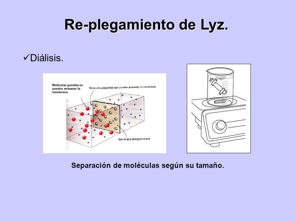 Re-plegamiento de Lyz. Diálisis.