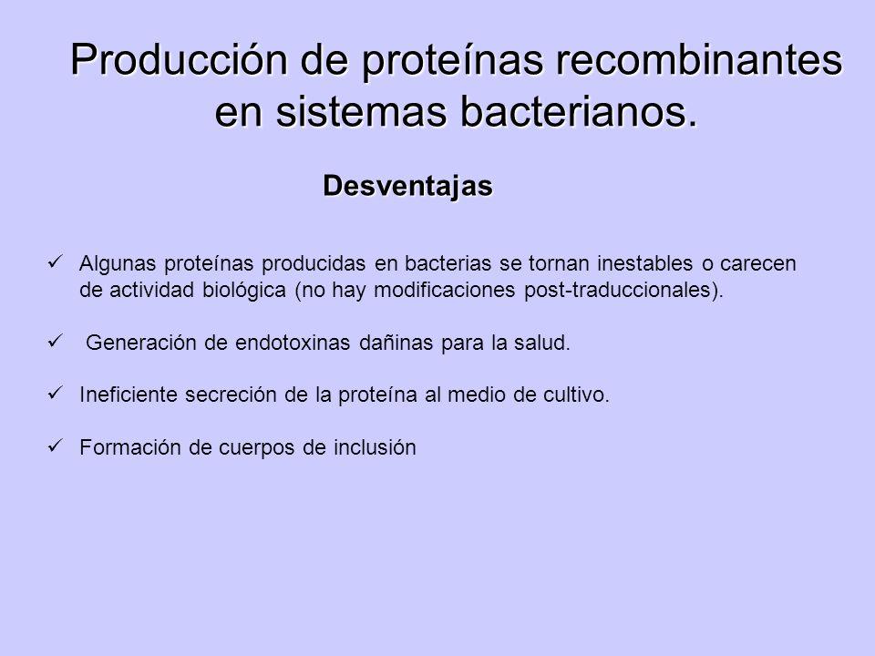 Producción de proteínas recombinantes en sistemas bacterianos.