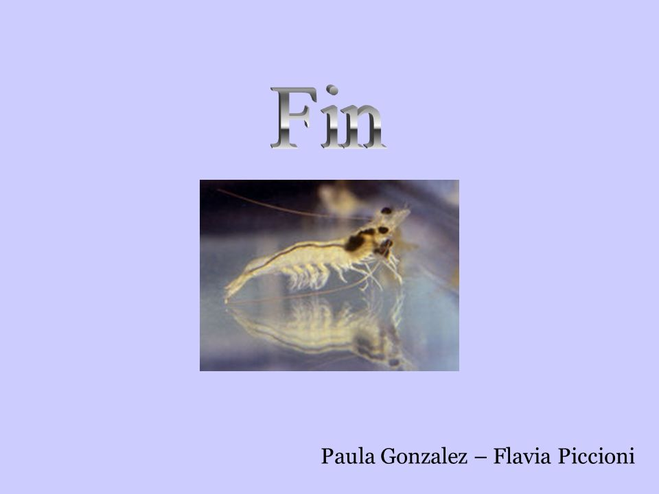 Fin Paula Gonzalez – Flavia Piccioni