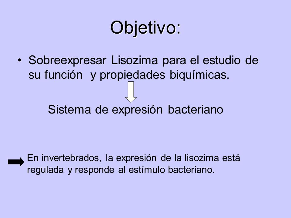 Objetivo:Sobreexpresar Lisozima para el estudio de su función y propiedades biquímicas. Sistema de expresión bacteriano.