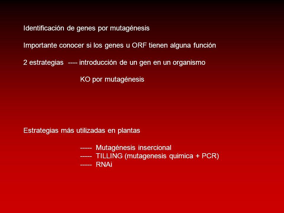 Identificación de genes por mutagénesis