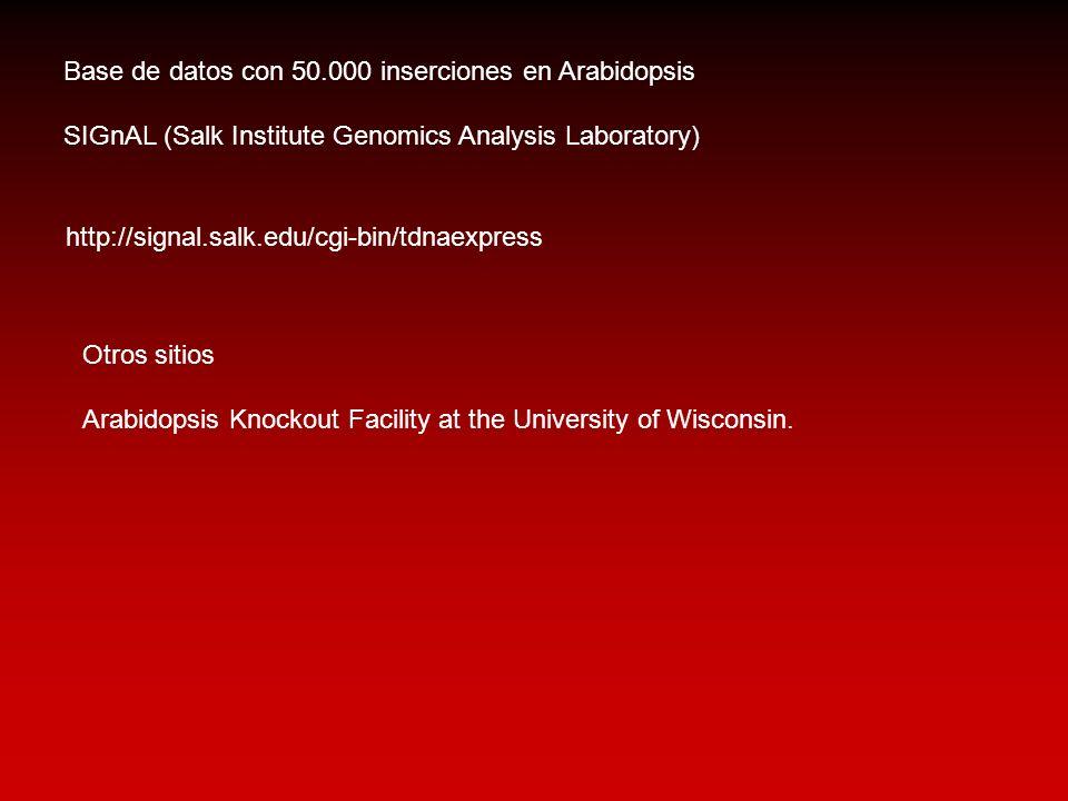 Base de datos con 50.000 inserciones en Arabidopsis