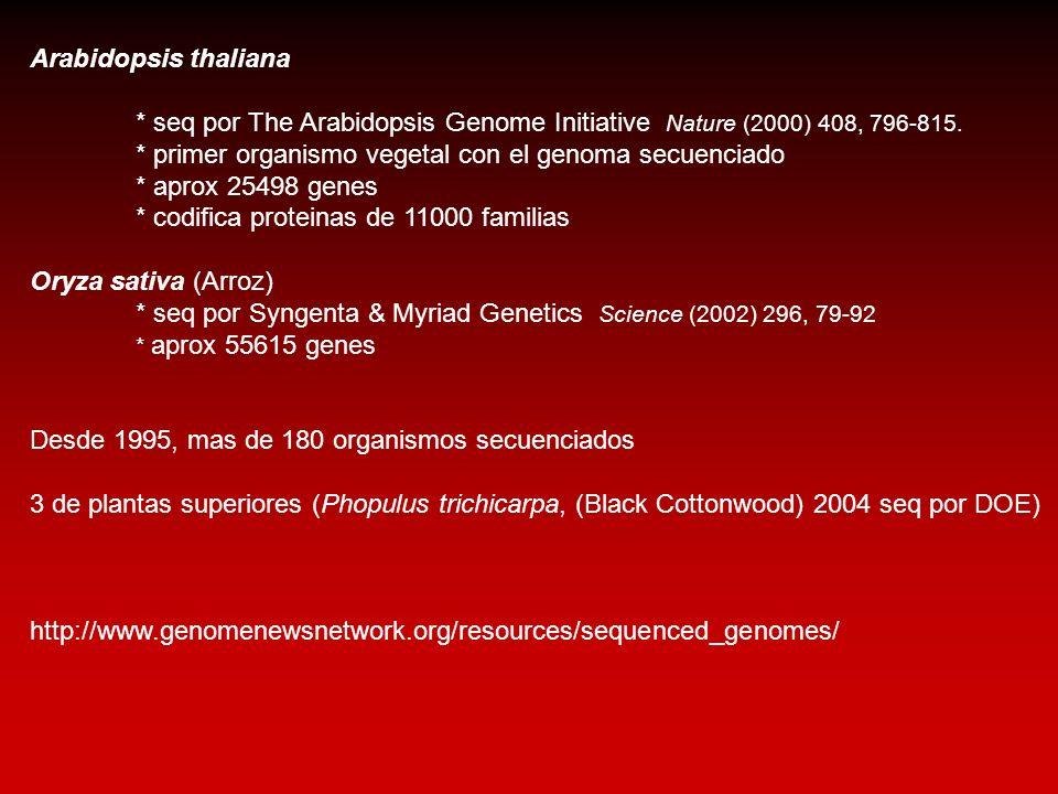 * primer organismo vegetal con el genoma secuenciado
