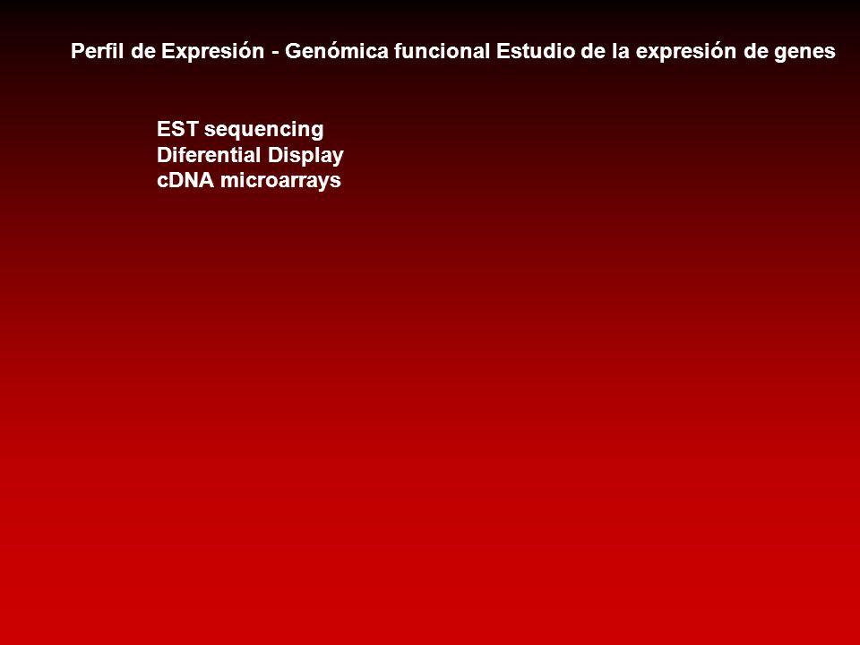 Perfil de Expresión - Genómica funcional Estudio de la expresión de genes