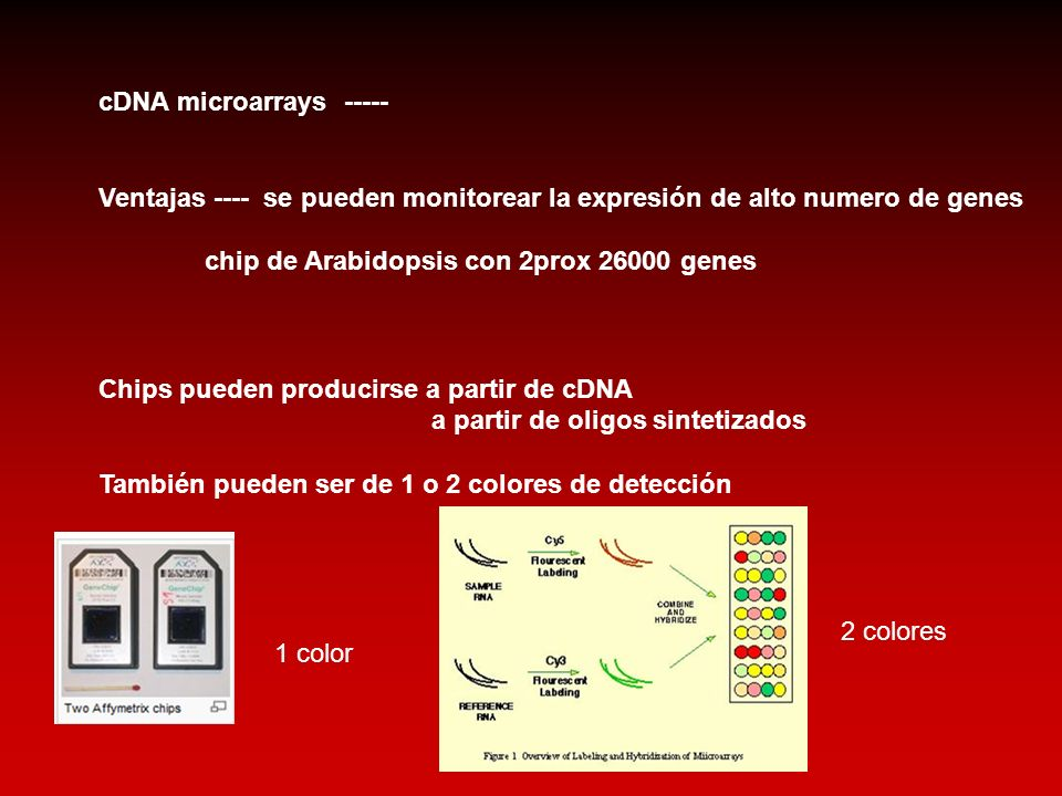 cDNA microarrays -----