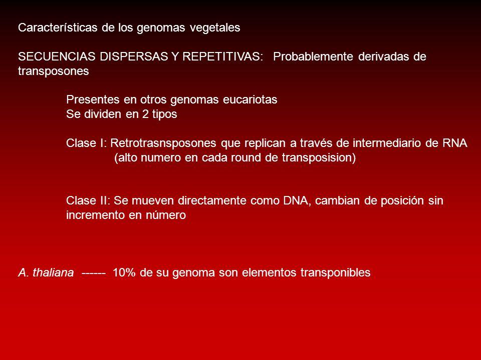 Características de los genomas vegetales