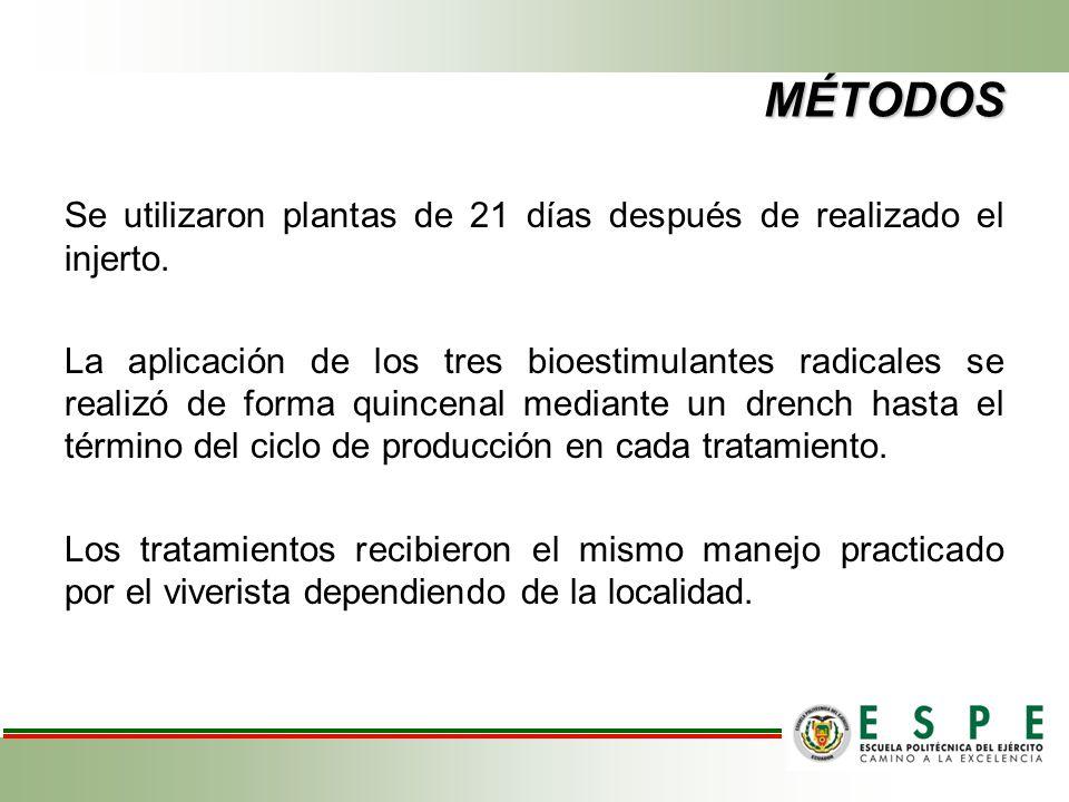 MÉTODOS Se utilizaron plantas de 21 días después de realizado el injerto.