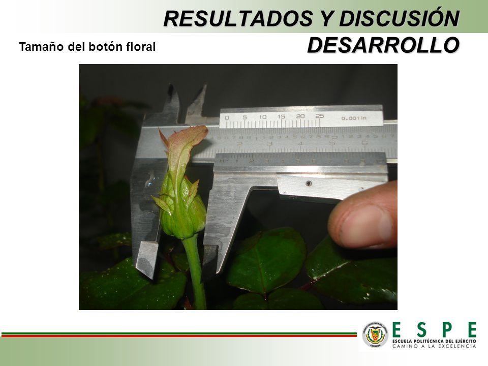 RESULTADOS Y DISCUSIÓN DESARROLLO