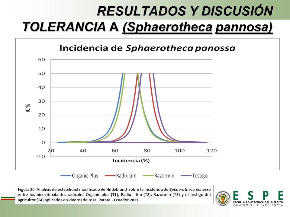 RESULTADOS Y DISCUSIÓN TOLERANCIA A (Sphaerotheca pannosa)