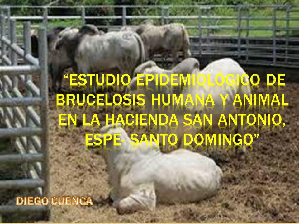 ESTUDIO EPIDEMIOLÓGICO DE BRUCELOSIS HUMANA Y ANIMAL EN LA HACIENDA SAN ANTONIO, ESPE- SANTO DOMINGO