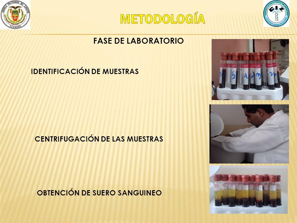 METODOLOGÍA FASE DE LABORATORIO IDENTIFICACIÓN DE MUESTRAS