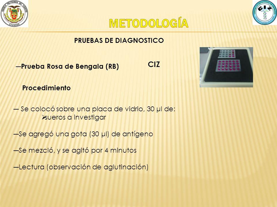 METODOLOGÍA CIZ PRUEBAS DE DIAGNOSTICO Prueba Rosa de Bengala (RB)