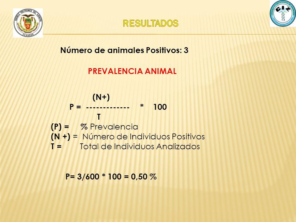 RESULTADOS Número de animales Positivos: 3 PREVALENCIA ANIMAL (N+)