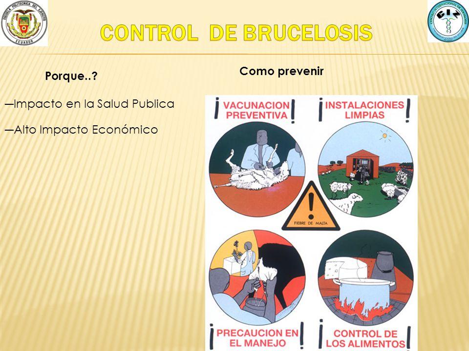 CONTROL DE BRUCELOSIS Como prevenir Porque..