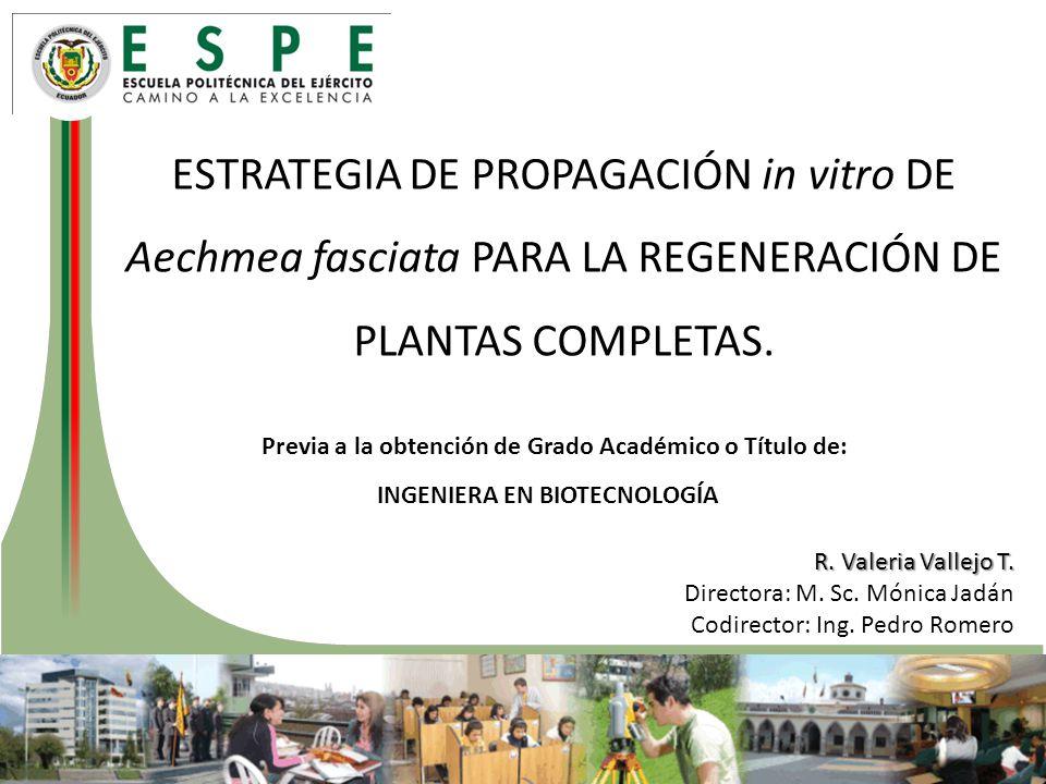 ESTRATEGIA DE PROPAGACIÓN in vitro DE Aechmea fasciata PARA LA REGENERACIÓN DE PLANTAS COMPLETAS.