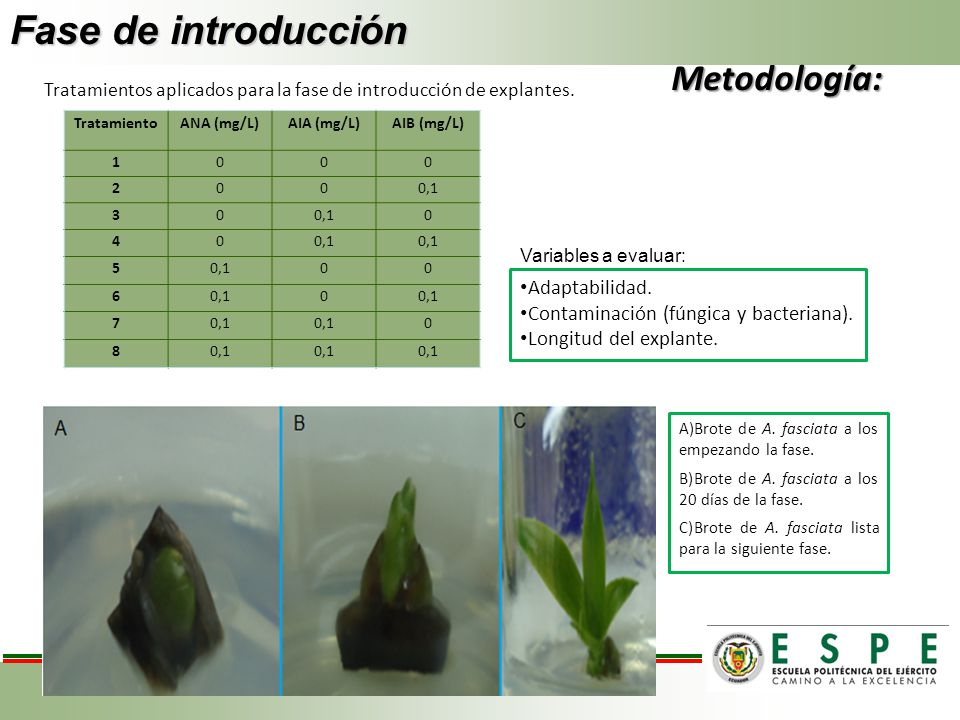 Fase de introducción Metodología: Adaptabilidad.