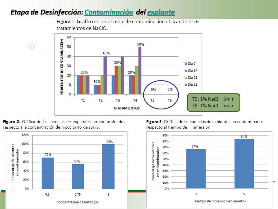 Etapa de Desinfección: Contaminación del explante