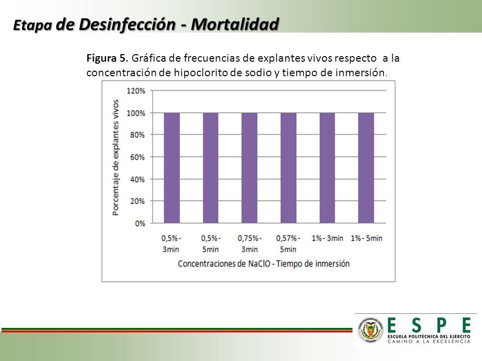 Etapa de Desinfección - Mortalidad