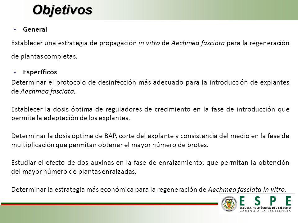 Objetivos General. Establecer una estrategia de propagación in vitro de Aechmea fasciata para la regeneración de plantas completas.