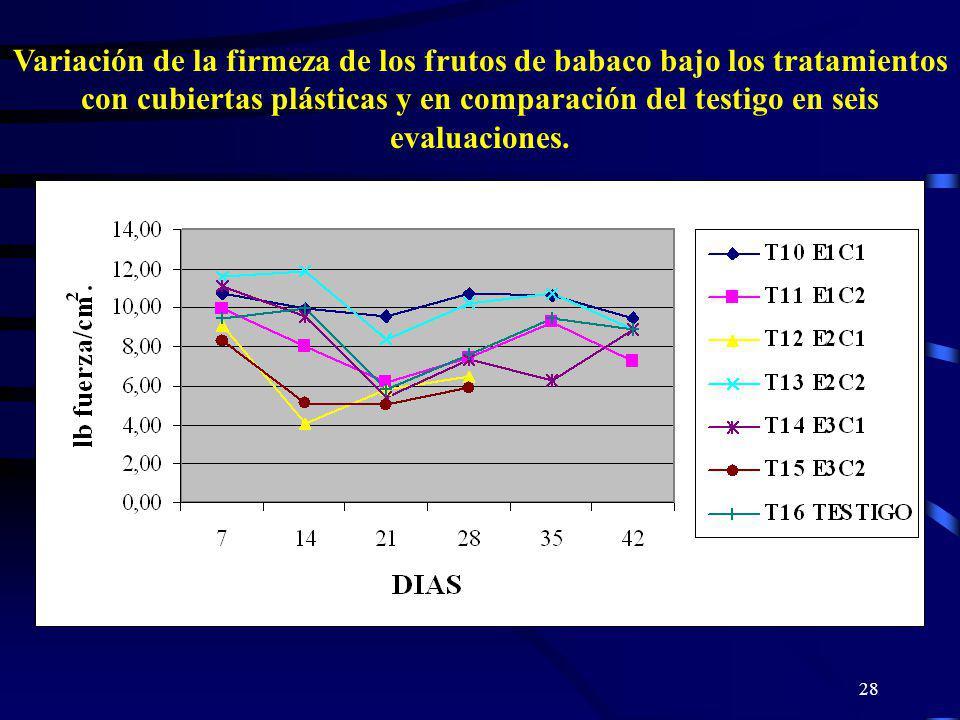 Variación de la firmeza de los frutos de babaco bajo los tratamientos con cubiertas plásticas y en comparación del testigo en seis evaluaciones.