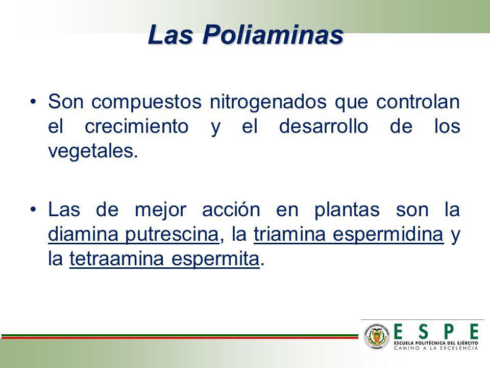 Las Poliaminas Son compuestos nitrogenados que controlan el crecimiento y el desarrollo de los vegetales.
