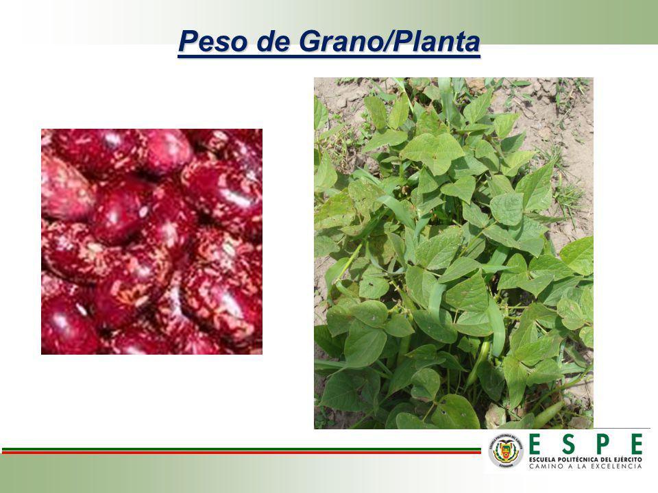 Peso de Grano/Planta