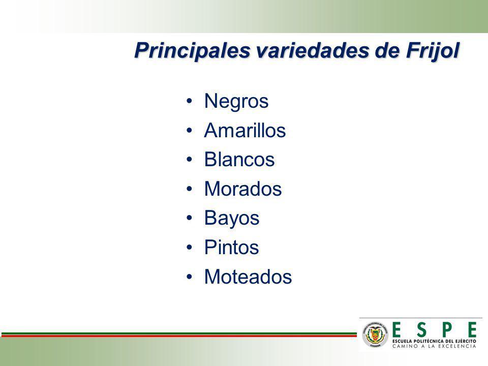 Principales variedades de Frijol