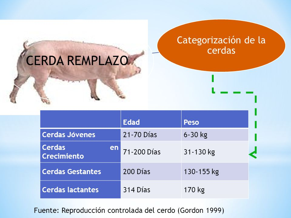 Categorización de la cerdas
