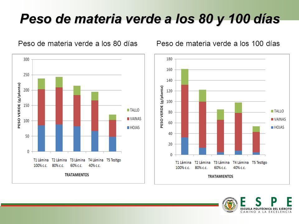 Peso de materia verde a los 80 y 100 días