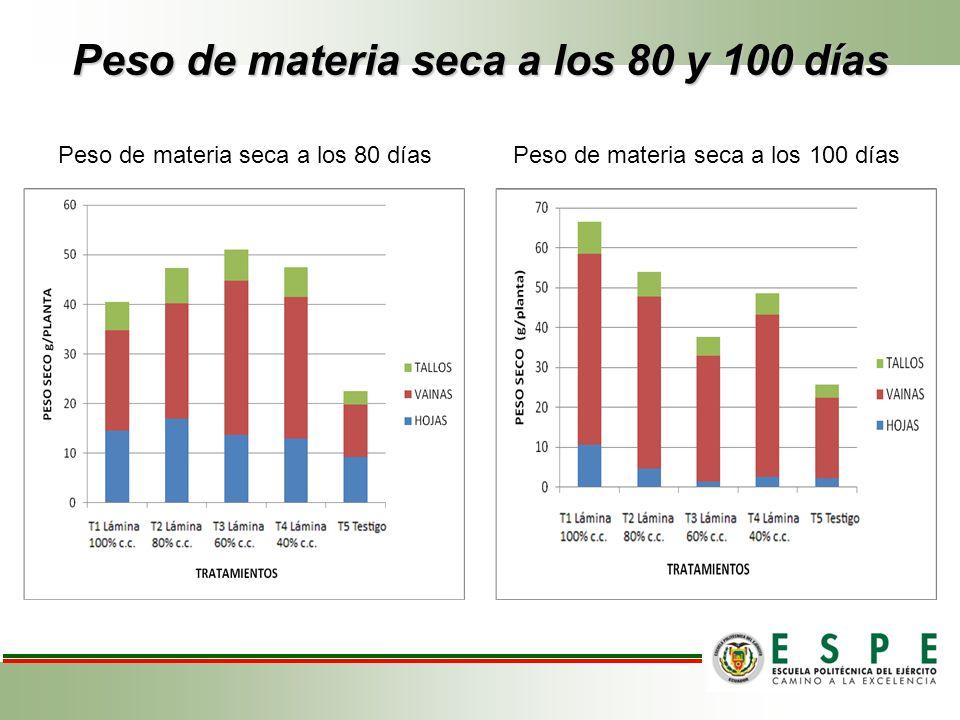 Peso de materia seca a los 80 y 100 días