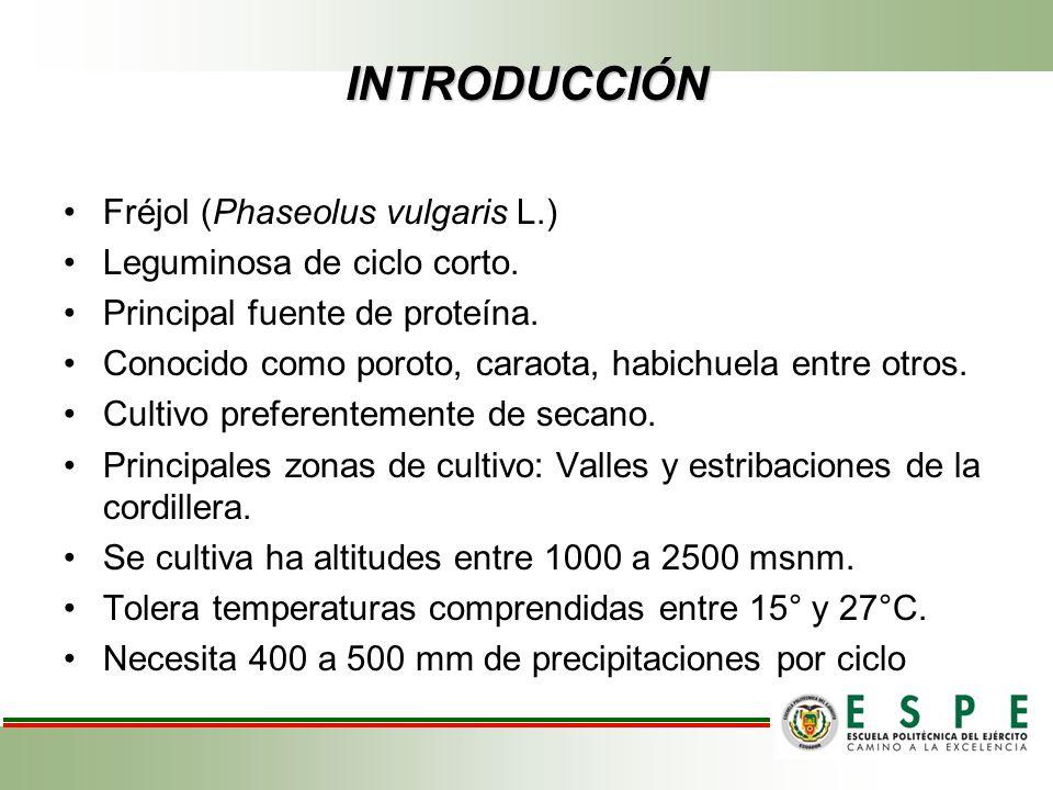 INTRODUCCIÓN Fréjol (Phaseolus vulgaris L.) Leguminosa de ciclo corto.