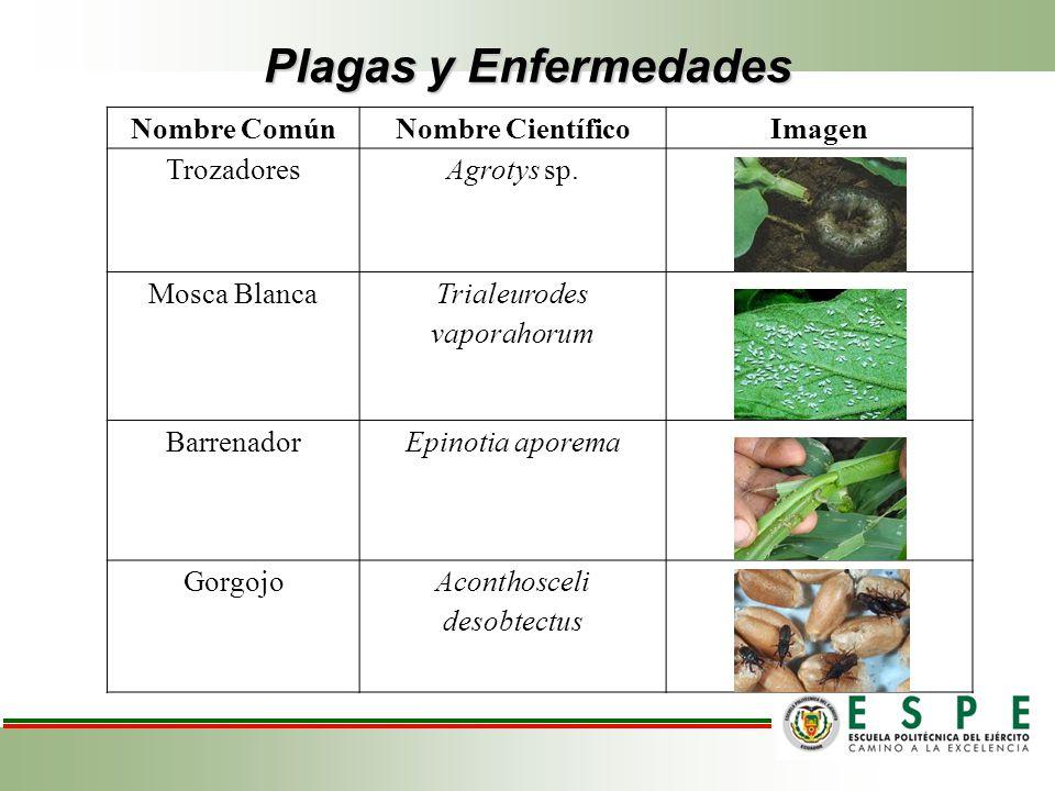 Plagas y Enfermedades Nombre Común Nombre Científico Imagen Trozadores