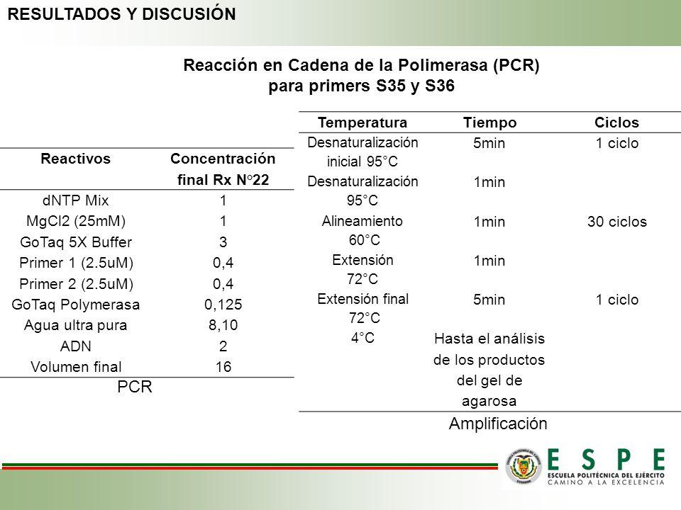 Reacción en Cadena de la Polimerasa (PCR) para primers S35 y S36