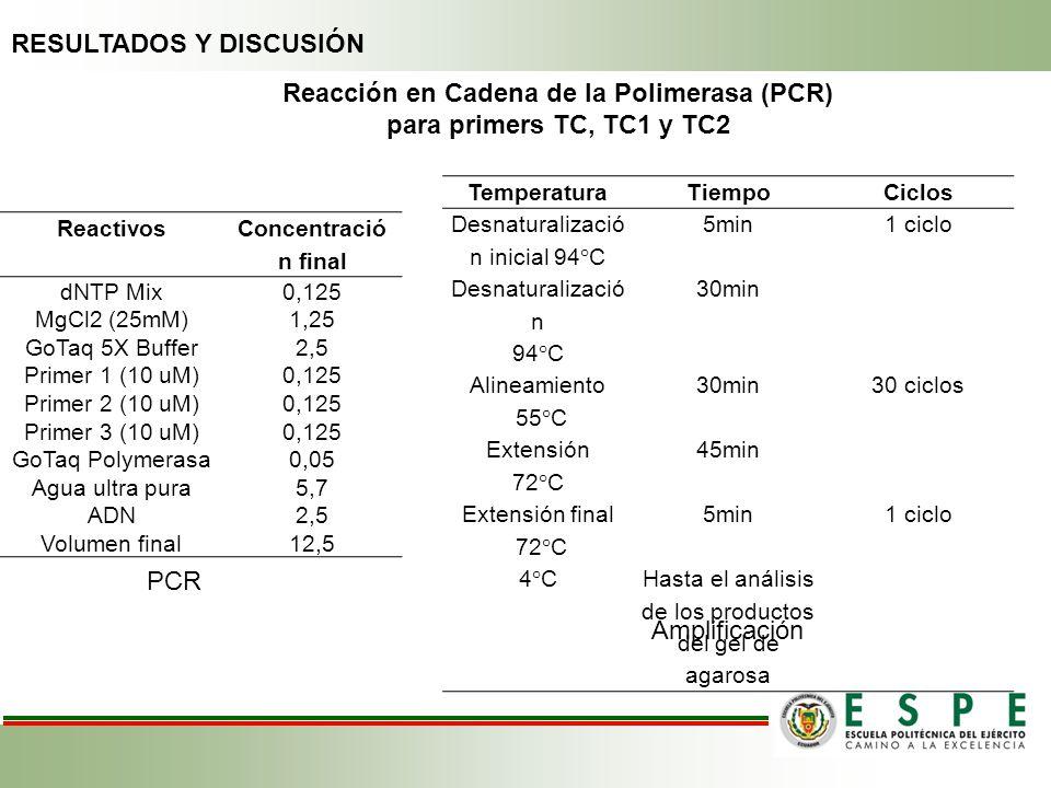 Reacción en Cadena de la Polimerasa (PCR) para primers TC, TC1 y TC2